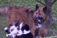 Mami und ihre Küken im Garten