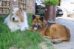 Ulko & Angie