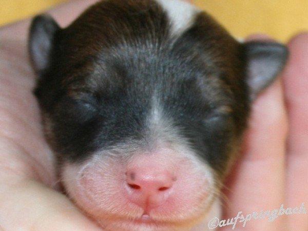 Clou gerade geboren